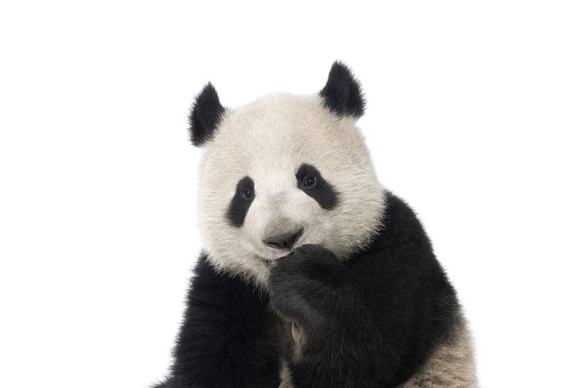 Panda 4.1 has landed.